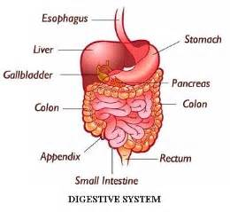 digestion system of hag picture 1