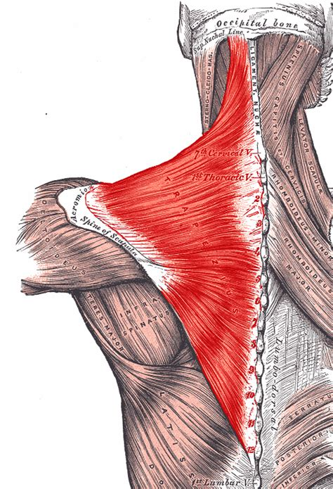 muscle spasms neck picture 1