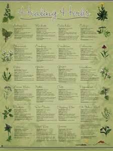 magic mountain herbal tea picture 3