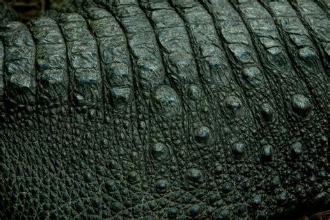 alligator skin on hands picture 18