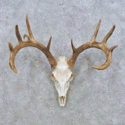 deer skull and h picture 13