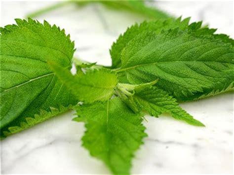 basil tea for stinging skin picture 9