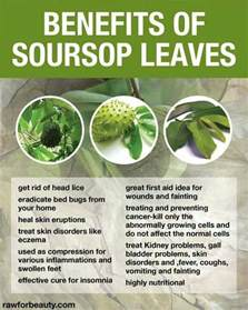can soursop leaves cure fibroid picture 1
