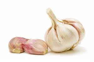 garlic picture 9