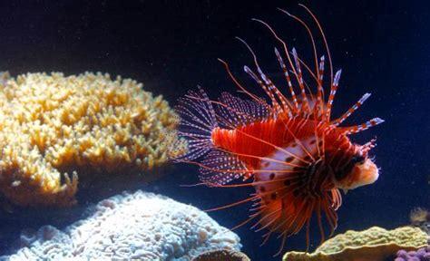 aquarium health picture 2