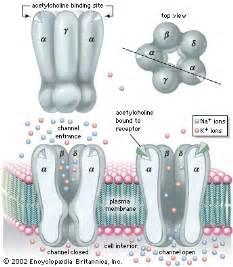 nicotine blocker medi ion picture 5