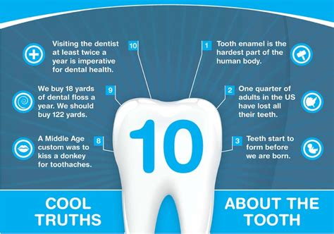 facts on teeth picture 9