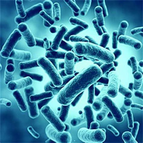 probiotic bacteria picture 6