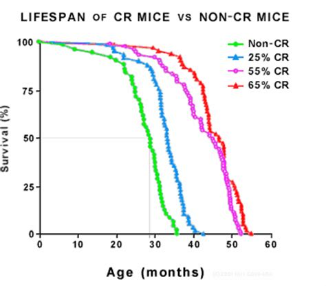 caloric restriction aging skin picture 13