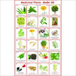 online glossary of herbal plants and their uses picture 21