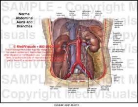 diagram descending colon picture 13