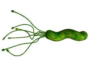 what herb clear of bacteria in the stomach picture 15
