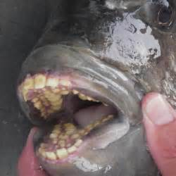 that have teeth picture 2