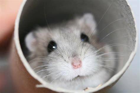 hamster videos picture 9