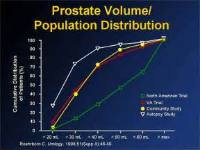 prostate 2006 picture 7