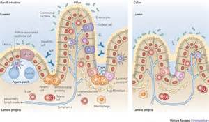 digestion appendix growling carbohydrates picture 14