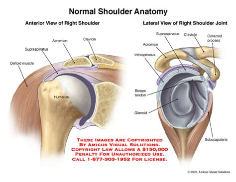 diagram of shoulder joint picture 6