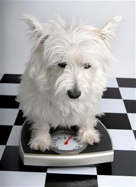 hypothyroid in dogs picture 7