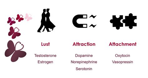 testosterone and estrogen in lust picture 1