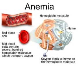 can hypothyroidism cause anemia picture 15