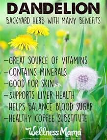 Dandelion herbal supplement picture 7