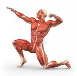 muscle photo picture 18