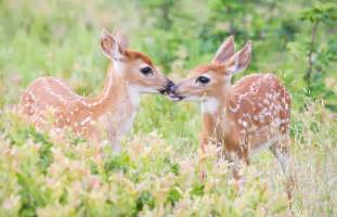 deer fawn s womans s picture 6