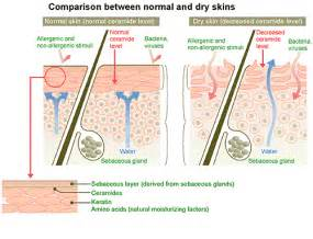 skin creams containing lipids picture 13