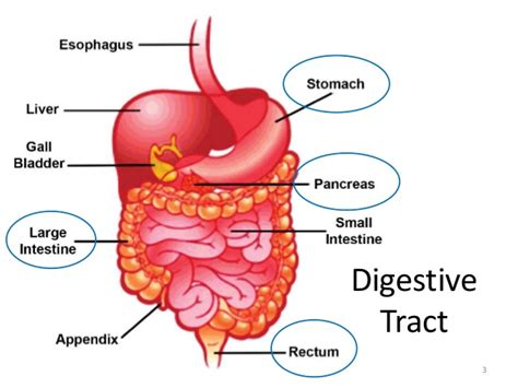 intestinal tract cancer symptoms picture 1