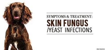 fungal and yeast problems in dogs picture 7