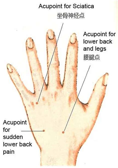 acupressure points for pelvic muscle spasms picture 14