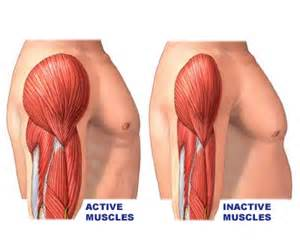 muscle deteriation picture 13