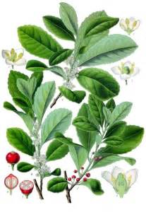 herbal encyclopedia picture 7