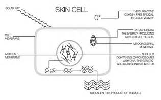 cell skin reproduction picture 22