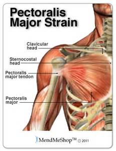 breast muscle strain picture 1