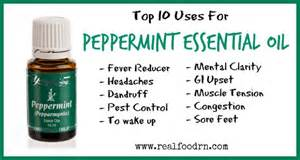peppermint essential oil picture 9