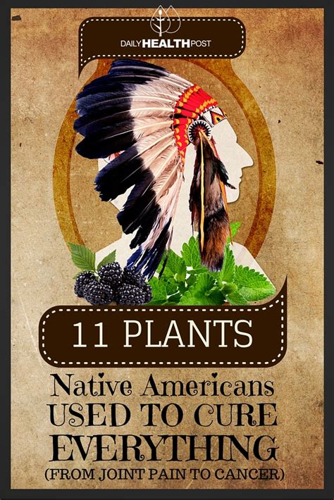 american indian herbs to treat ed picture 4