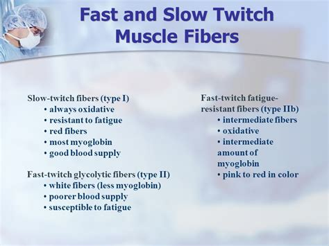 fast twitch and slow muscle fibers picture 4