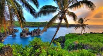 +hawaiin silky herbal picture 6