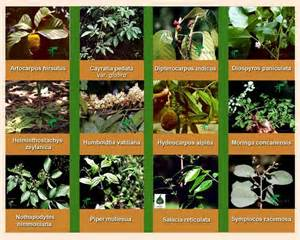 herbal plants and its uses with procedures picture 11