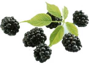 acai berry information picture 15
