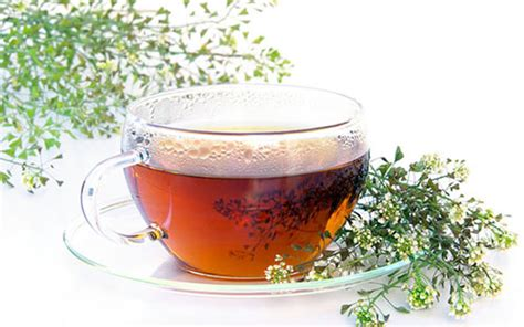 yarrow tea picture 17