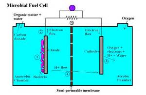microbial fuel cell picture 2