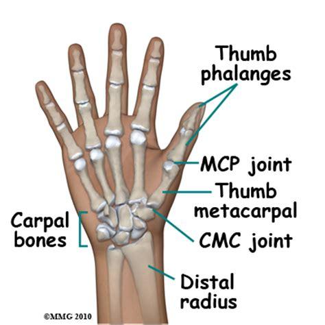 metacarpal phalangeal joint measurement picture 3