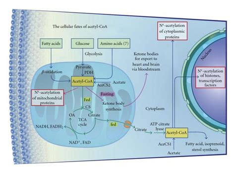 selenium and thyroid peroxase picture 5