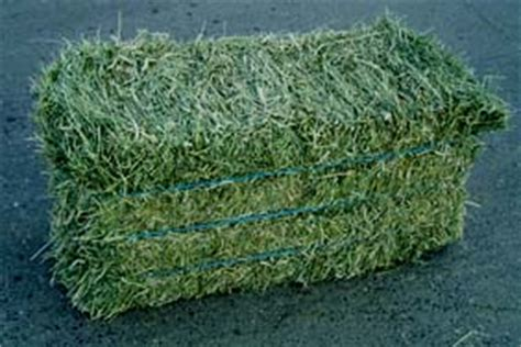 3 string alfalfa bales for wholesale in texas picture 12