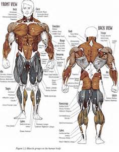 testosterone bodybuilding and blood pressure picture 9