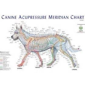 canine hip joint photos picture 10