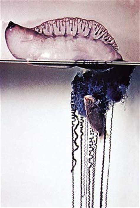 cnidaria diet picture 17