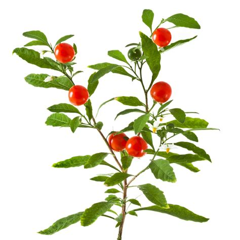 ashwaganda for weight loss picture 9